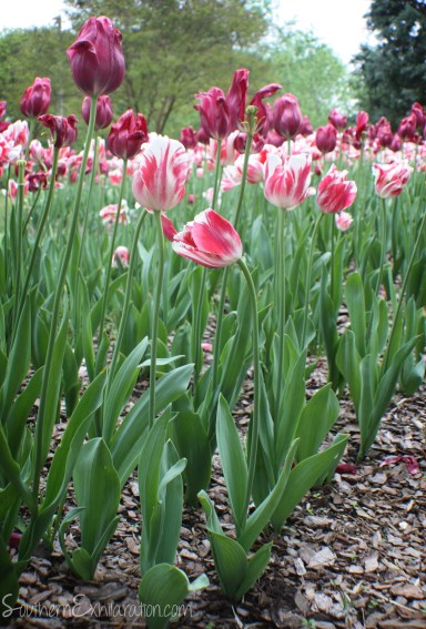 Atlanta Botanical Garden   Atlanta, GA