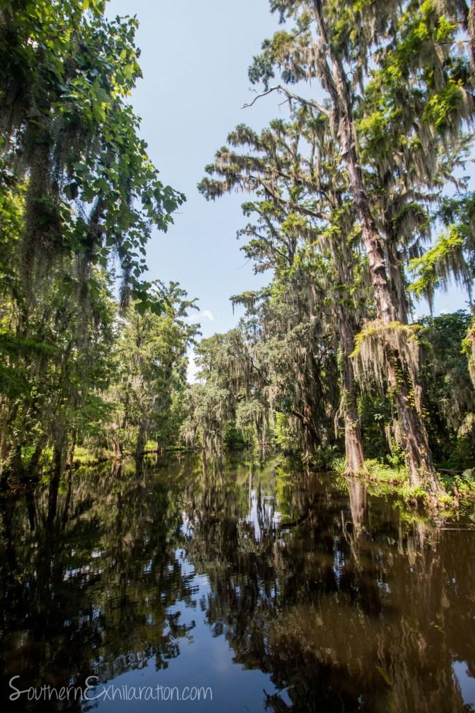 Magnolia Plantation & Gardens | Charleston, SC