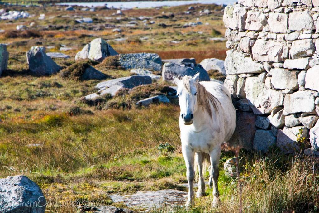 Wild Atlantic Way | Ireland
