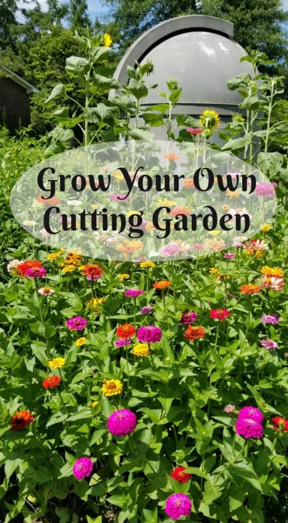 How to grow your own cutting garden, Planting a Cutting Garden