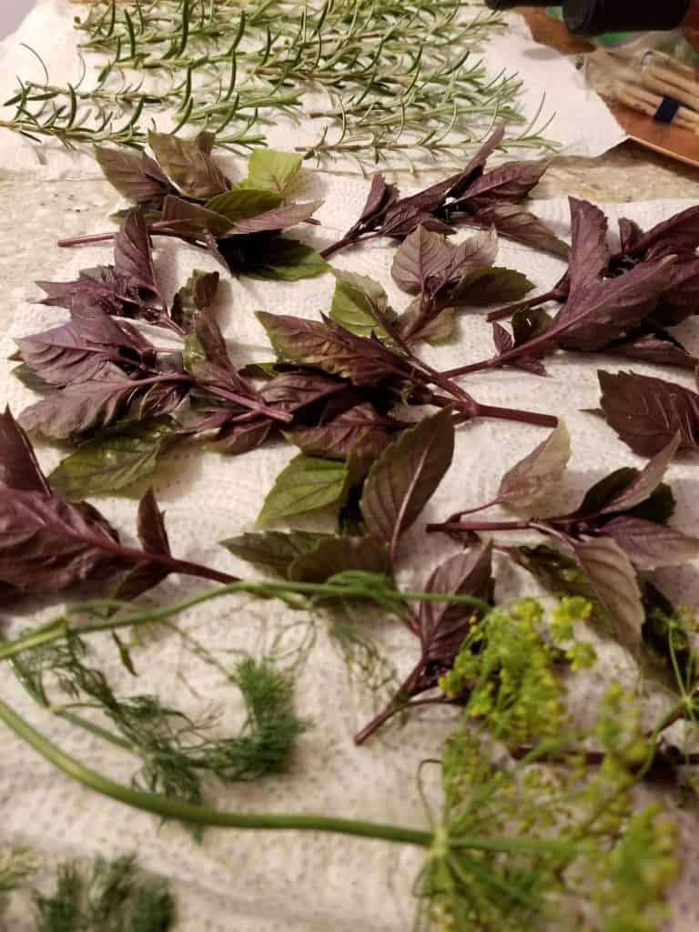 Easiest Way to Dry Herbs, Dill, Purple Basil. and Rosemary stems laying out to dry