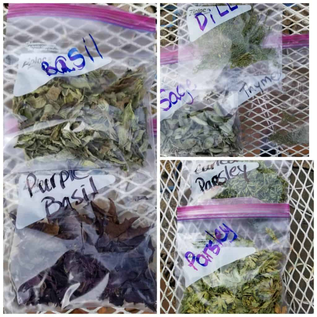 Easiest Way to Dry Herbs, ziploc bags filled with dried herbs, basil, sage, parsley