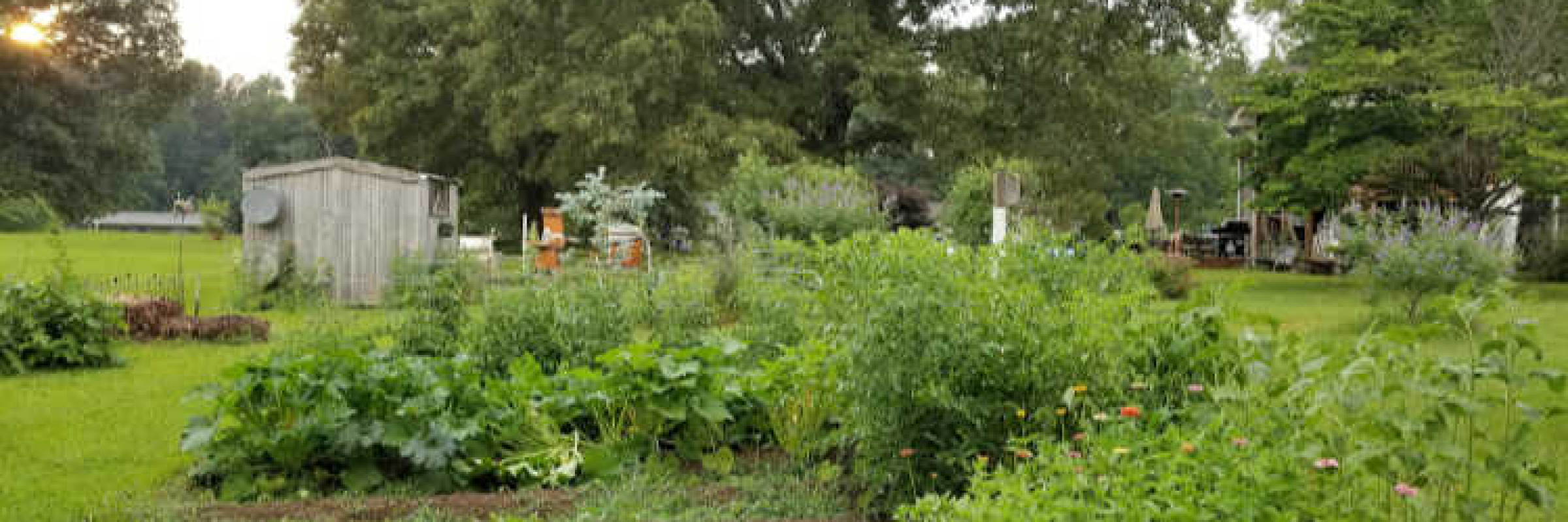 Vegetable Garden with barn and trees in background