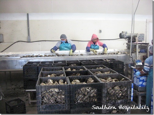 Oyster workers