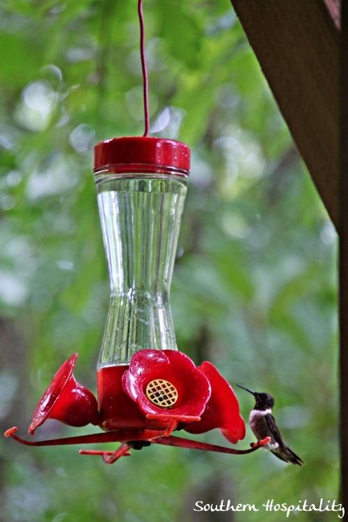 hummingbird-close.jpg