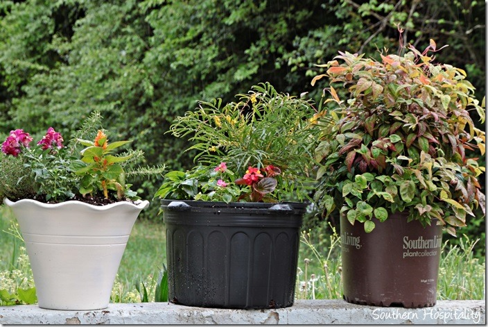 southern living container plants