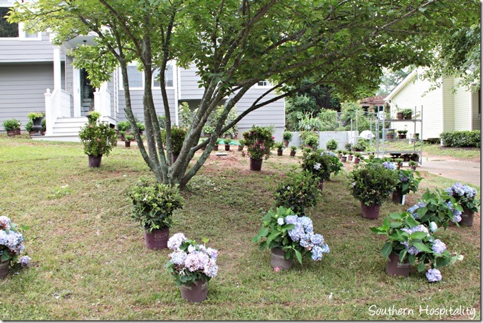 plants placed 4