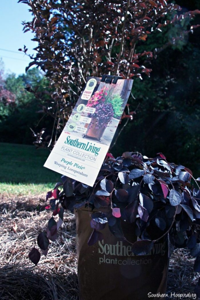 southern living plants20151017_001