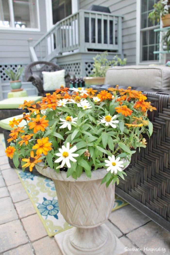 outdoor patio space with umbrella014