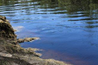 Pretty View of the Suwannee River 2