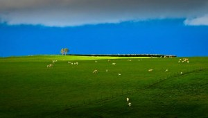 New Zealand's clean green image personified in the Strath Taieri