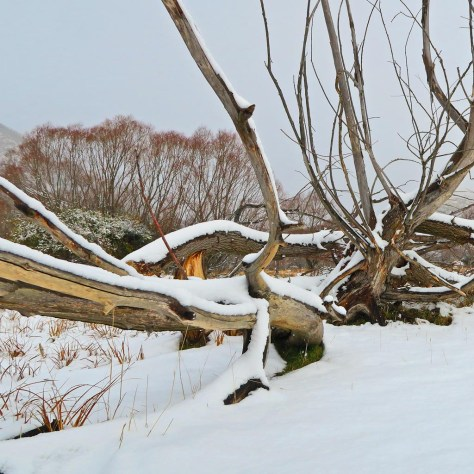 Willow, Cardrona Valley and snow
