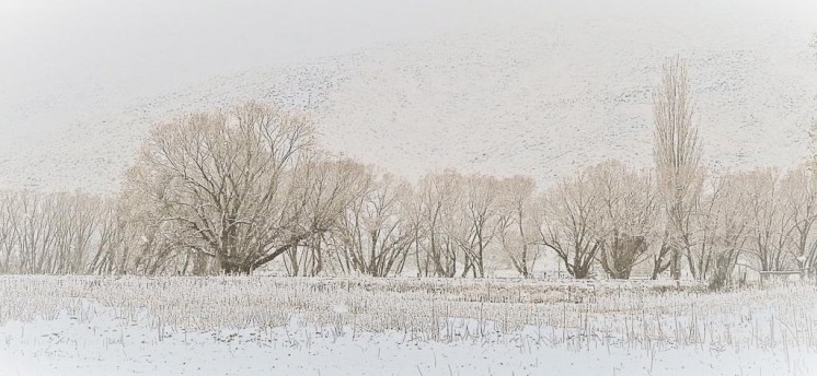 Willows in the snow, Cardrona Valley