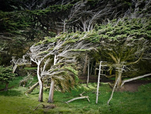 catlins windswept trees at slope point