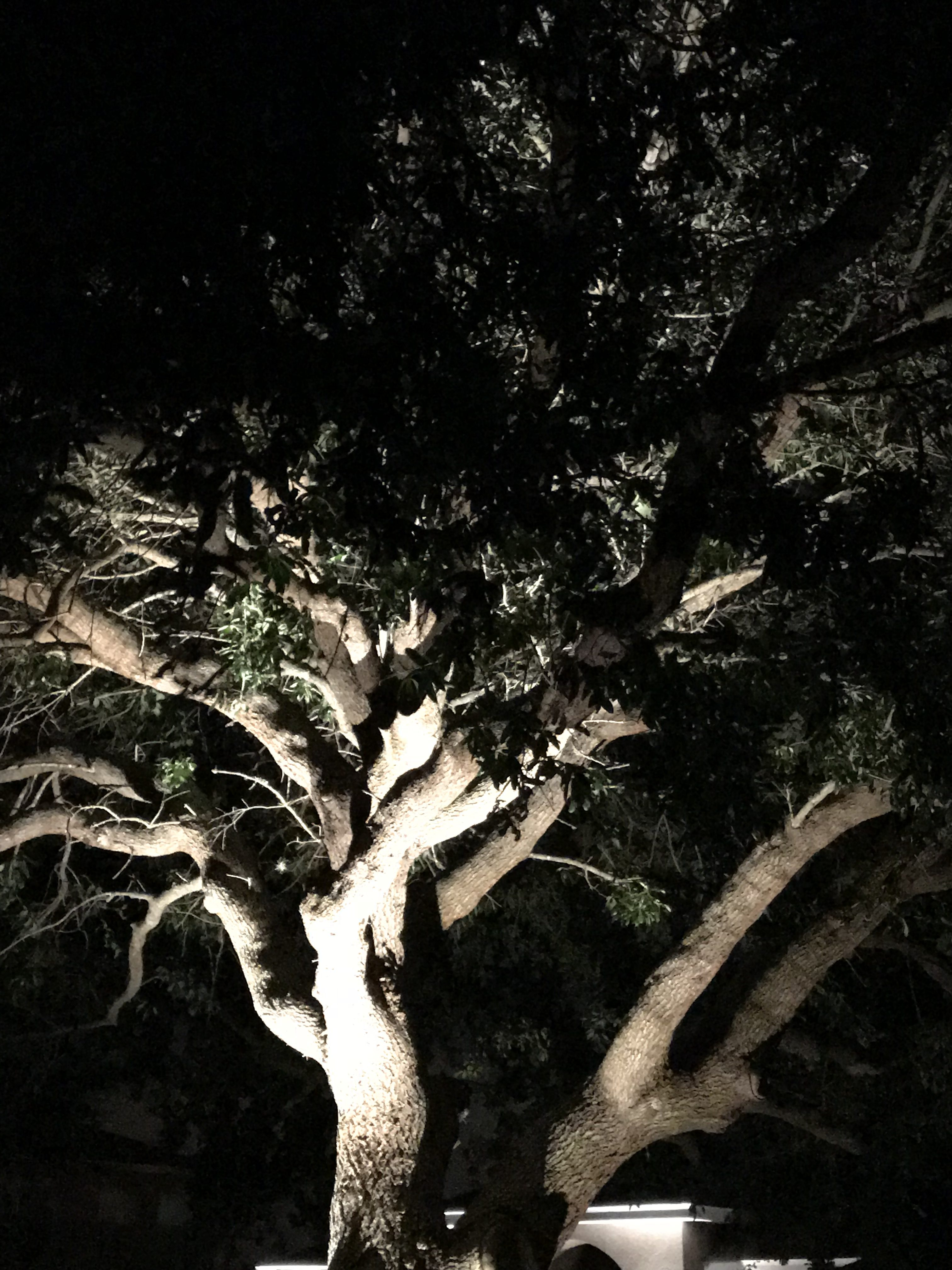 view of branches lit in a tree