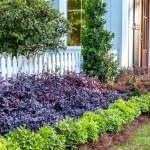 Seeking Versatility In Garden Design Give Purple Diamond Semi Dwarf Loropetalum A Try