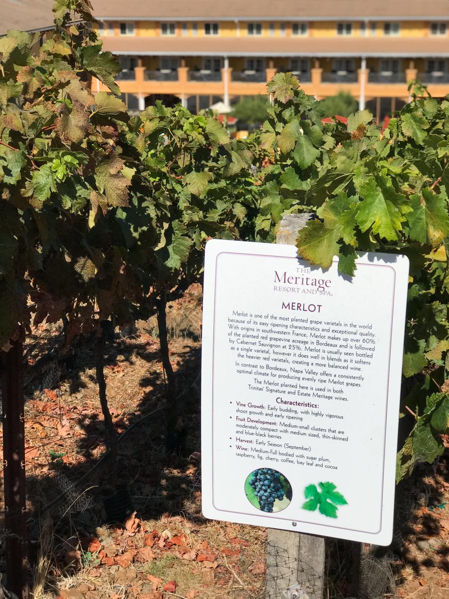 Tips for Visiting Napa Valley |Southern Made Blog