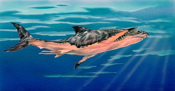 Megalodon-illustration-tim-scheirer