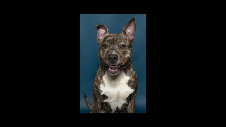 Pets In Need in Southern Maryland Dog of the Week Detroit