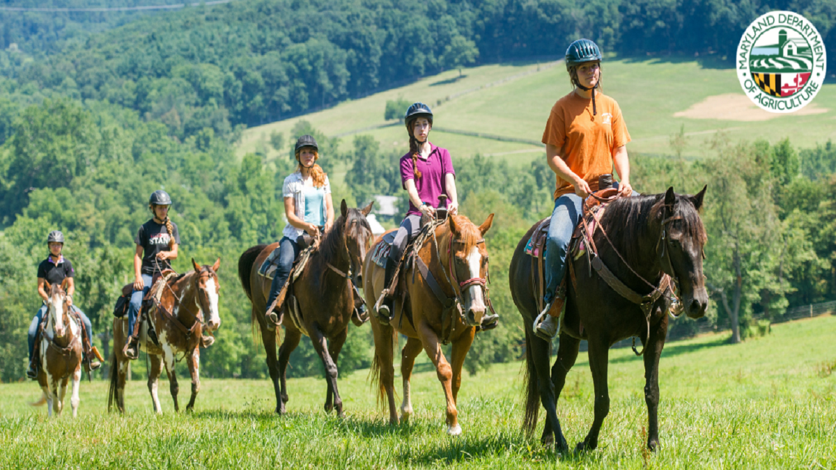 Maryland's Recreational Horseback Riding Sector Grows Over Past Year
