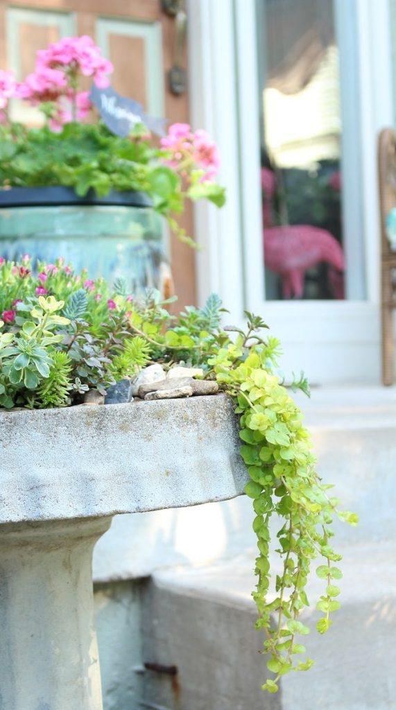DIY Succulent Birdbath Garden with Trailing Greens
