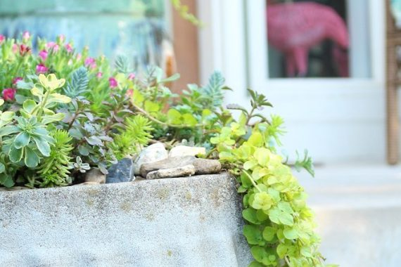 DIY Succulent Birdbath Garden with Trailing Greens