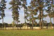 Pine Tree obstacle at Southern Pines CDE