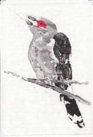 Kim Whitbread Channel-billed Cuckoo NSW