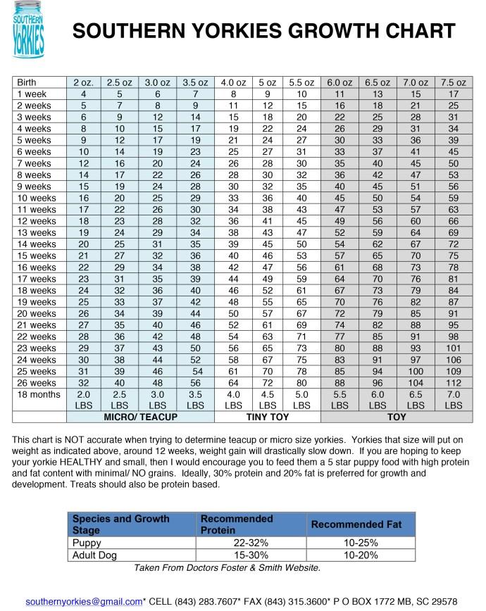 Yorkie Growth Chart Southern Yorkies
