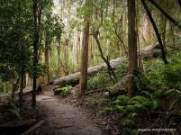 LillyPillyGully_walking-track-wilsons-prom4