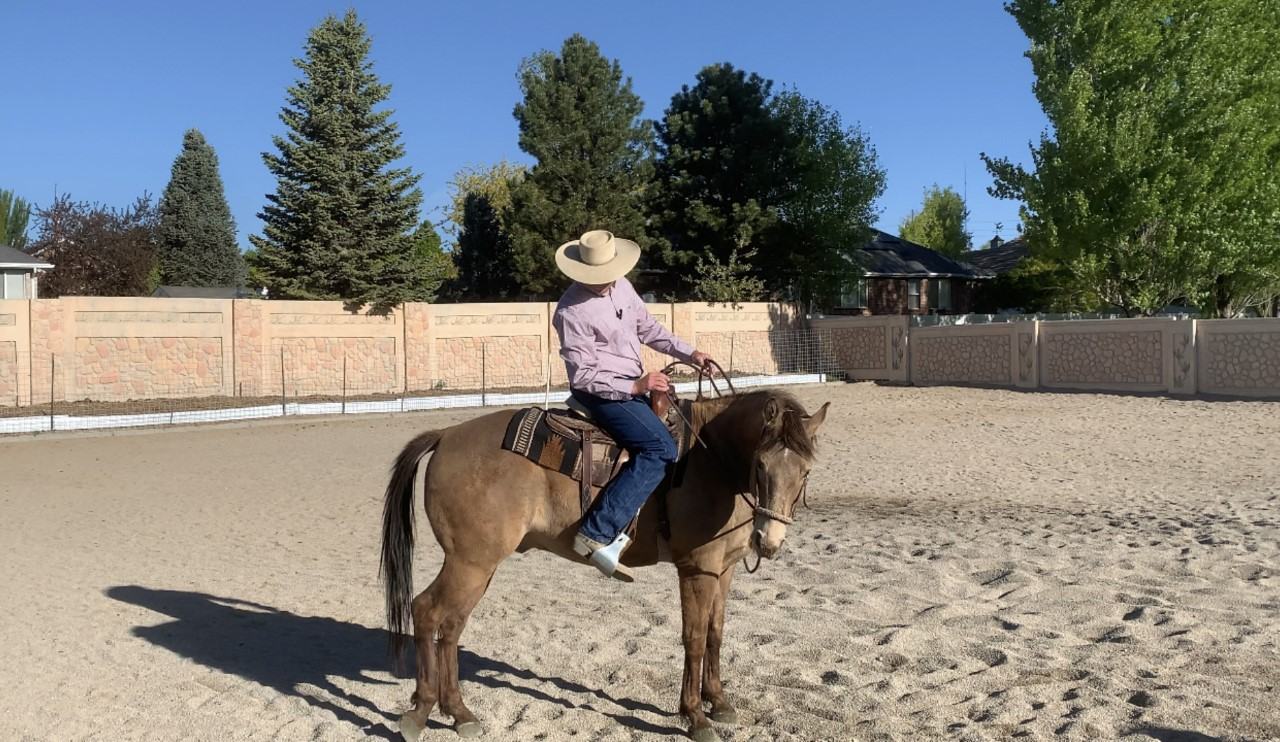 Yield the hind quarters from the saddle