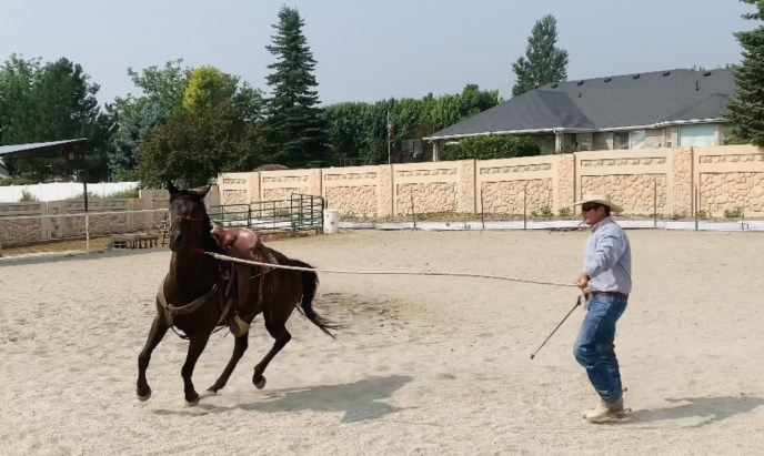 Lunging Challenges 3 - Horse backs up instead of lunging