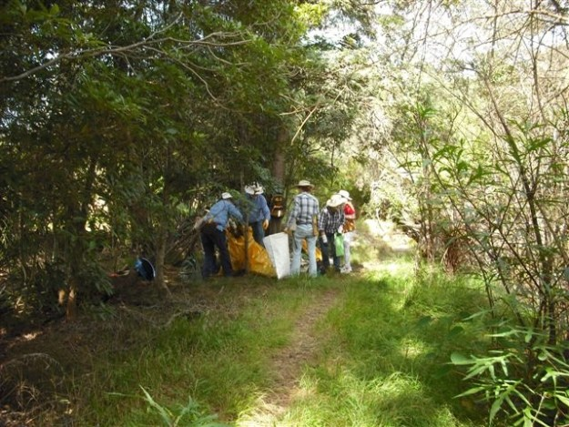 Bagging and removing weeds from native forest April 2016
