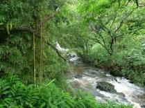 Orderly jungle stream