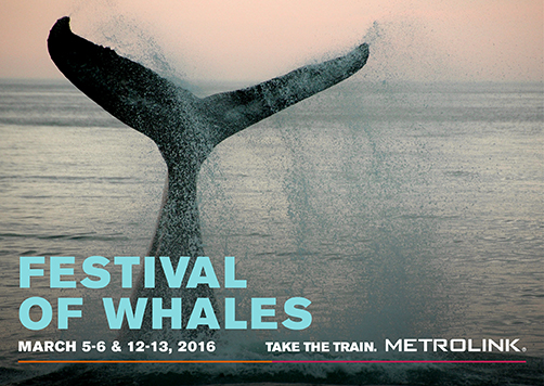 Festival_of_whales_2016 metro link