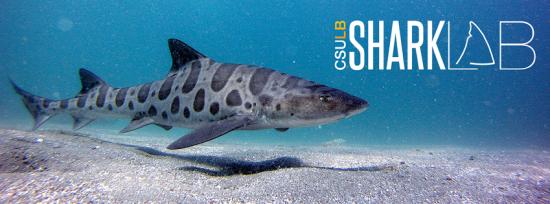 CSULB Shark Lab