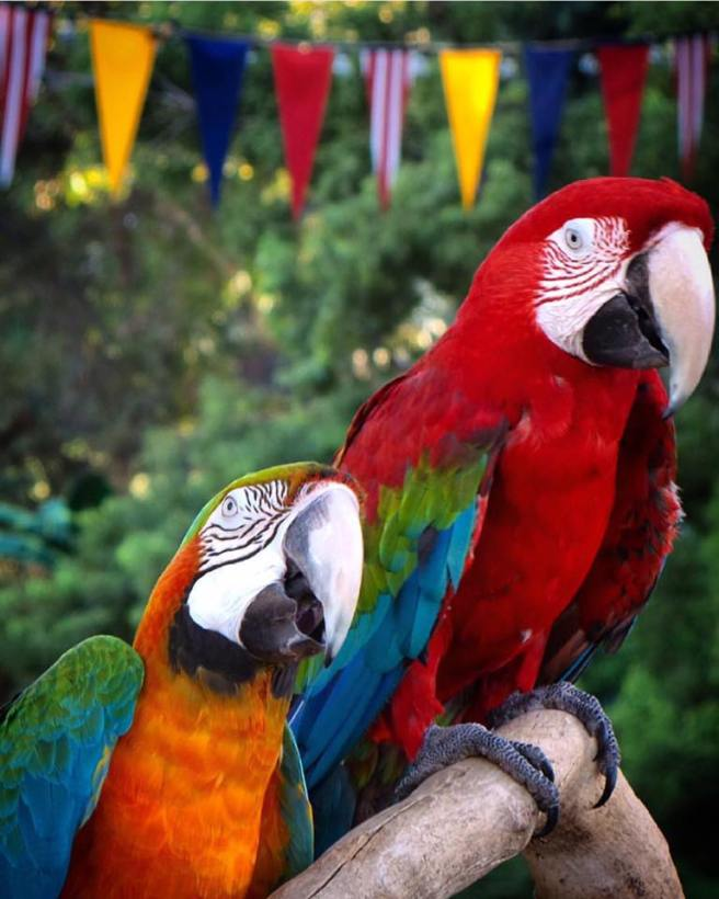 Image Courtesy of Facebook.com:Pacificanimalproductions