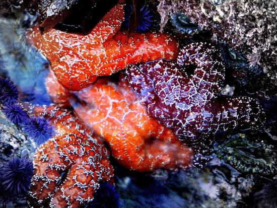 tidepools-courtesy-of-ocean-institute-org