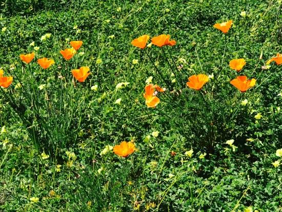 Springtime Flowers by SouthOCBeaches.com