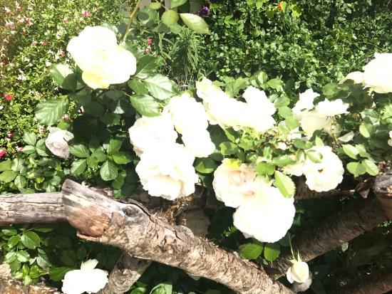 California Spring Flowers by SouthOCBeaches.Com
