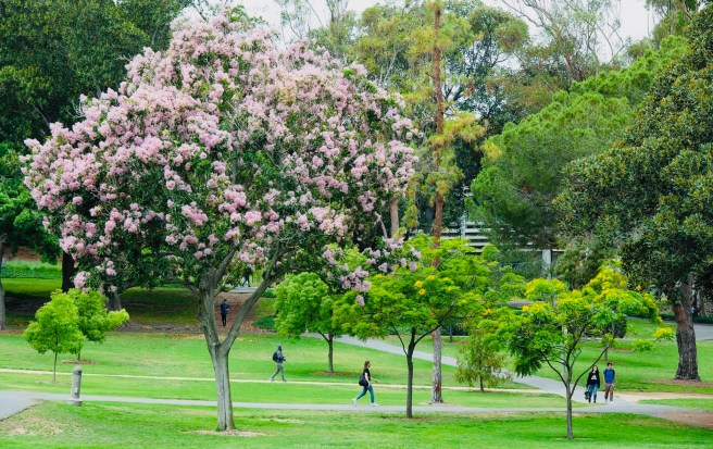 University of California Irvine Aldrich Park Courtesy of UCI.edu