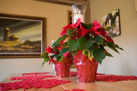 2017_1209_Holiday_House_08