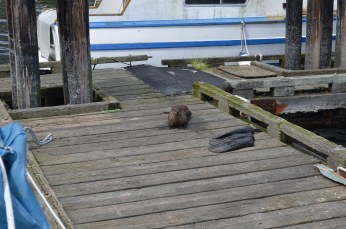 Luksana is afraid this Otter will attack.