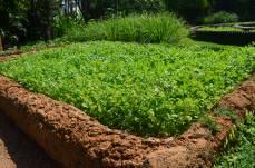 coriander or Canadian will call it Cilantro