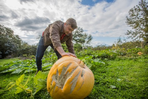 The_Farm_Pumpkin_Harvest_10