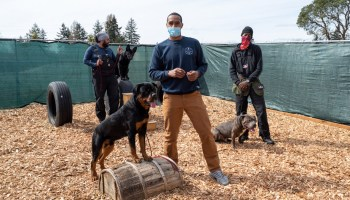 Northwest K-9 co-owners Marcus Wright (front) with Guapo, Tyler Clark and Beans (German Shepard) and Zayne Brown and his dog Stone pose in the training yard of their business in Des Moines.
