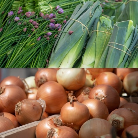 Displays of onions and other greens offered at the Columbia City Farmers Market.