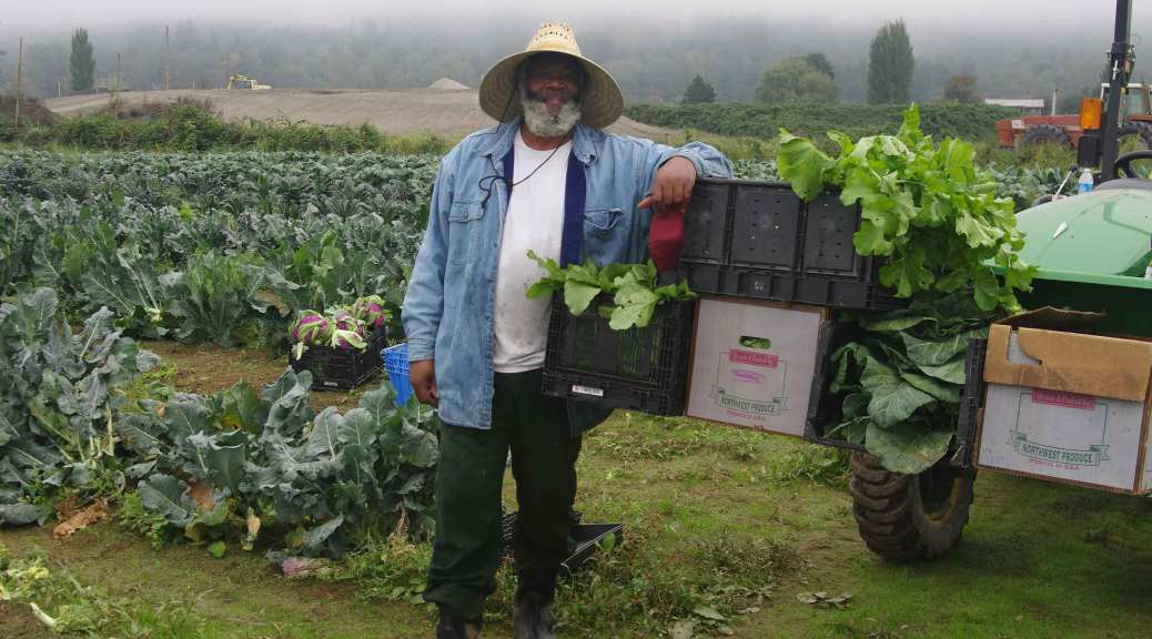 Farmer Tom Willis stands in front of the Clean Greens farm, their arm resting on a bed of harvested greens.