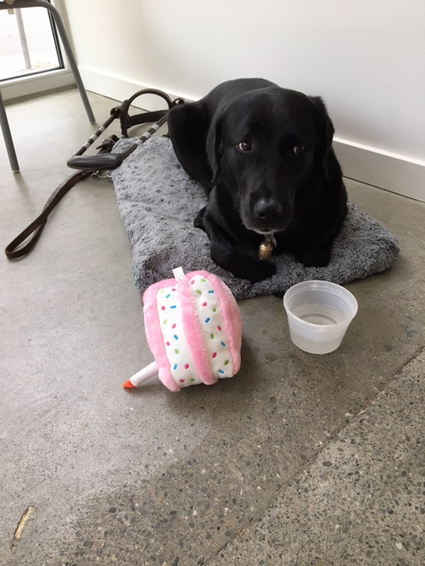 Photo depicting a black Labrador guide dog lying on a fluffy grey dog bed with a bowl of water and pink birthday cake stuffed toy in front of her. Her harness and leash lie behind her.