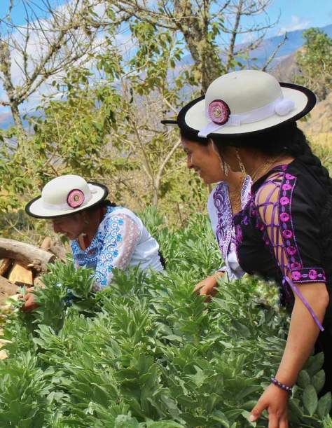 Photo depicting three female-presenting individuals bent over native plants and smiling.